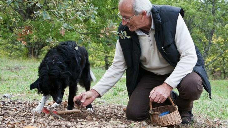 truffle-farm-pechalifour